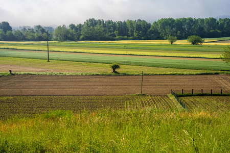 Rural landscape near Asti, Piedmont, Italy, in a morning of May