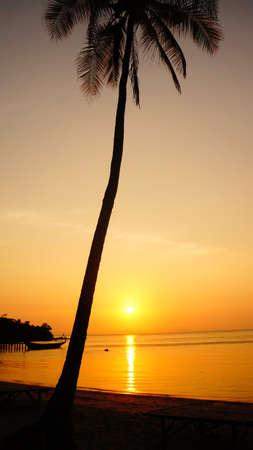 Shadowed palm on Rabbit Island, Cambodia 版權商用圖片