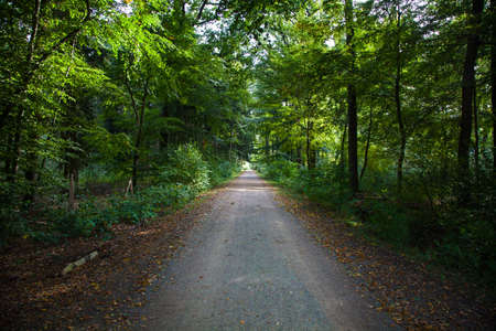 Green Forest Footpath Black Forest Stock Photo