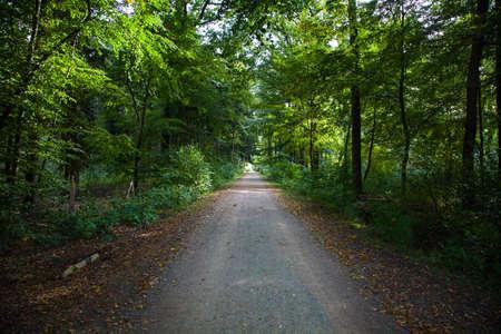 Green Forest Footpath Black Forest Standard-Bild