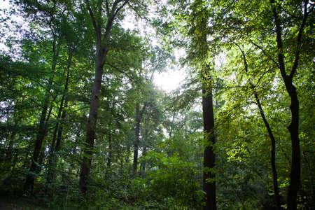 Green Forest Standard-Bild