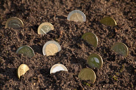 Money growth golden euro cent coins growing from soil. Selective focus