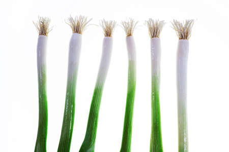 Green spring Onion on white background