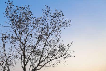 slight: Twilight sky with slight  treetop