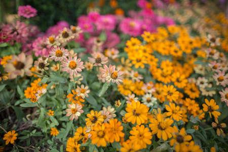 petites fleurs: petites fleurs fond Banque d'images