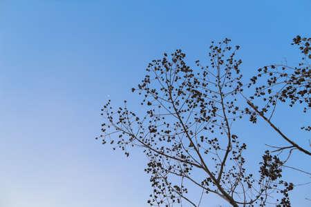 Blue sky with slight  treetop