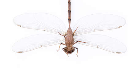 Dragonfly isolated on a white background. Stock Photo