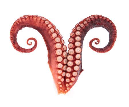 tentacules de poulpe isolé sur fond blanc