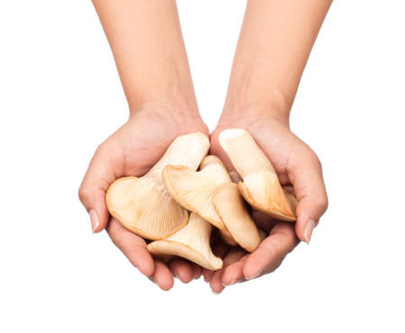 hand holding oyster mushroom isolated from the white background.
