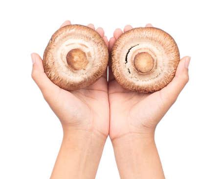 hand holding portobello mushrooms, isolated on white background.
