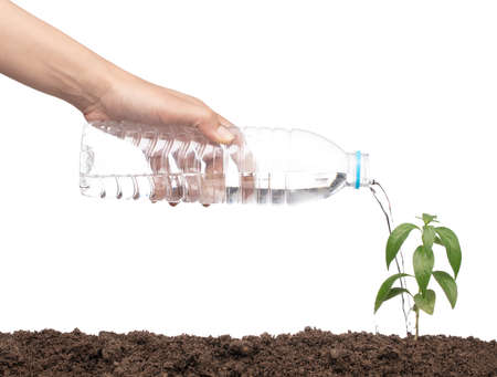 hand watering a plant by plastic bottle isolated on a white background.