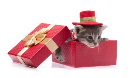 cat in red christmas hat with gift box isolated on white background