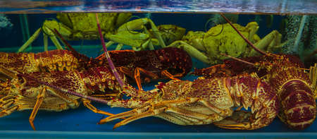 close up of Alaskan king crab Imagens