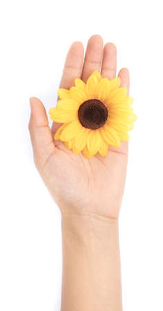 hand holding Artificial sunflower isolated on white background.