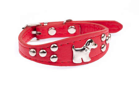 Red pet collar isolated on white background Reklamní fotografie