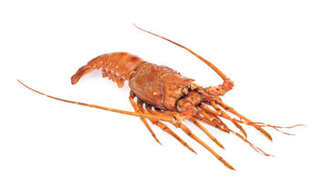 delicious freshly steamed lobster isolate on a white background