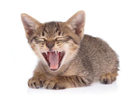 Little kitten isolated on white background. cat baby