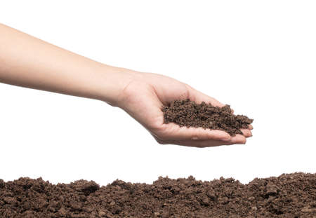 hand to plant seedlings into fertile soil isolated on white background