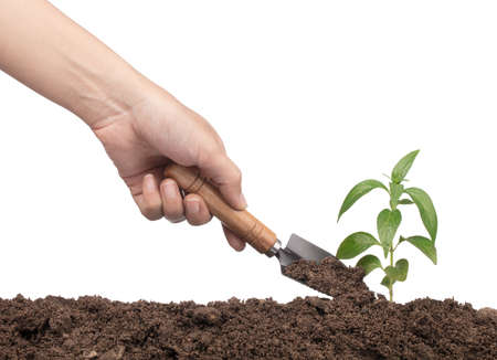 hands with garden tool planting a tree isolated on white background Stock Photo