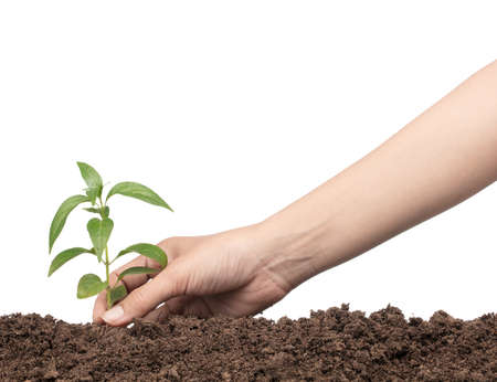 hands planting a tree isolated on white background