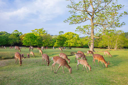 Many young deer in meadow of natural environment. Reklamní fotografie