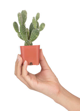 Hand holding Opuntia cactus in pot isolated on a white background Imagens - 124889575