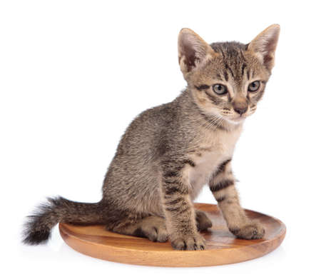 Cute Little kitten on wood plate isolated on white background. cat baby