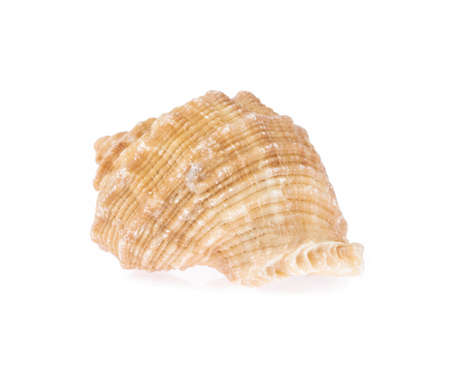 beautiful sea shell isolated on white background Imagens