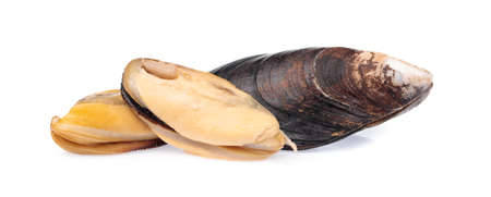 Cooked mussels isolated on white background