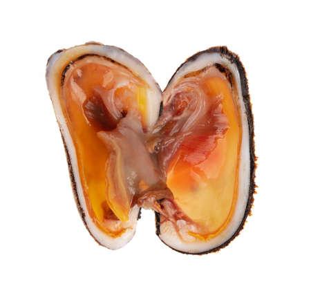 Arcidae Ark clam fresh isolated on white background