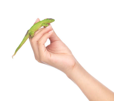 hand holding lizard isolated on a white background Stock Photo