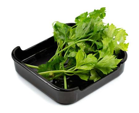 Fresh parsley on plate isolated on white background