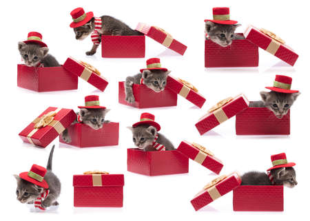 collection of cute cat in red christmas hat with gift box isolated on white background.