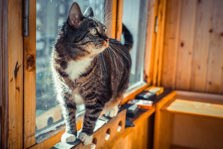 balcony window: Pretty male domestic cat in a home setting on the balcony window. Stock Photo