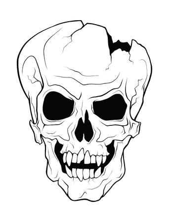 5450 Cranium Human Stock Vector Illustration And Royalty Free