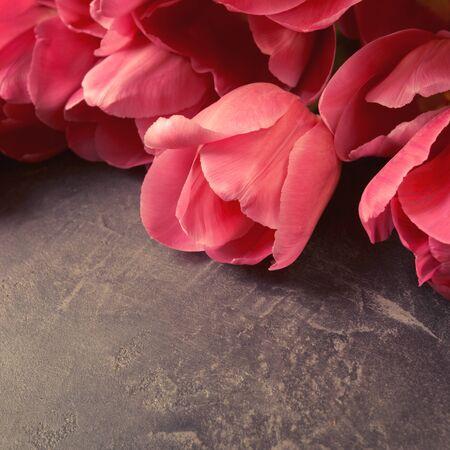 Pink tulips on a dark gray grunge background. Copyspace.