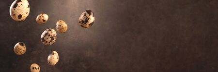Quail egg flying on dark brown backdrop. Banner with copyspace.