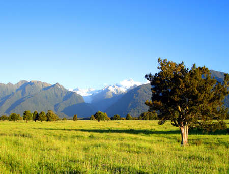 Tree in Grassy Field in front of Mount Cook and Mount Tasman. Te Wahipounamu World Heritage Area Banco de Imagens