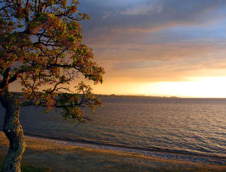 Lake Taupo in the Evening Sun, New Zealand
