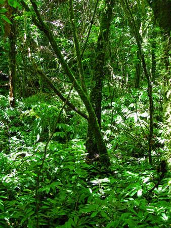 Green Rainforest of Waitomo, New Zealand