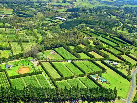birds eye view: Aerial View of Agriculture near Paihia, Bay of Islands, New Zealand Stock Photo
