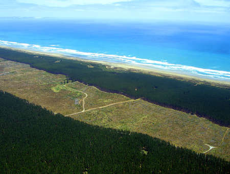 mile: Aerial view of Aupouri Forest (Pine Plantation) alongside Ninety Mile Beach, Northland, New Zealand