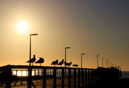 adelaide: Seagulls in Silhouette on a Wooden Jetty in front of the Evening Sun.  Largs Bay, Adelaide, Australia Stock Photo