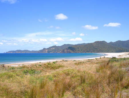 barrier island: Coastal Grasses in front of Whangapoua Beach, Great Barrier Island, New Zealand