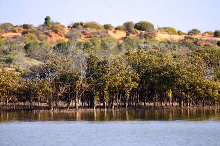 gulf: Outback Ocean Mangroves, near Redbanks at the top of Spencer Gulf, Port Augusta, South Australia
