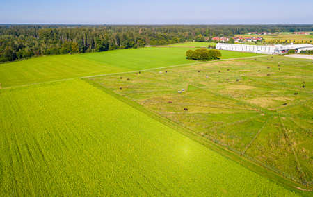 Green pastures of horse farms. Countryside landscape. Drone Aerial Shot. Paddocks, Outdoor Banco de Imagens - 156614574