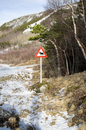 Norwegian elk warning road sign photo
