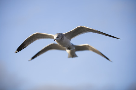 seabirds: Seabirds flying Stock Photo
