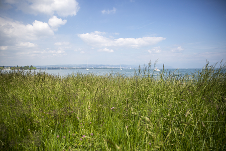 leman: View of the Geneva lake - lac Leman - from a green meadow
