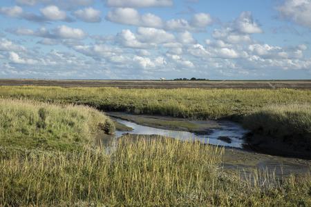 Maritime landscape with heathland, blue sky and cloud, Waddenzee, Friesland, The Netherlands
